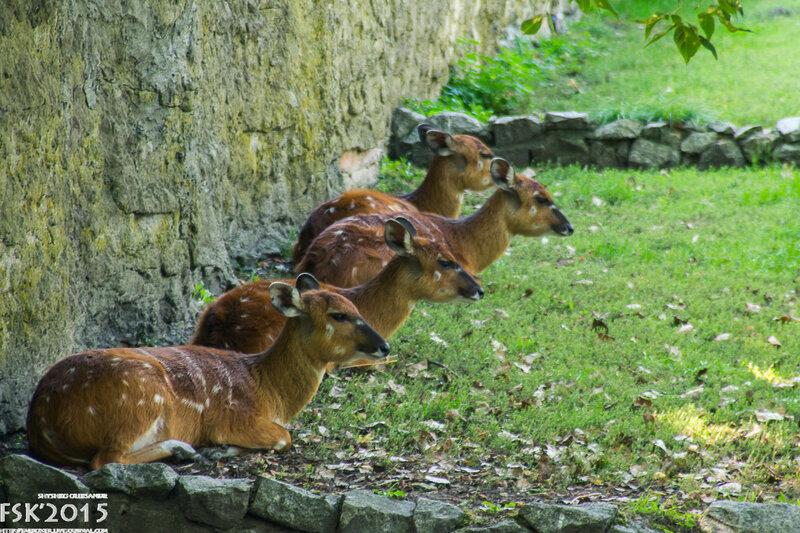 warshaw_zoo-18.jpg