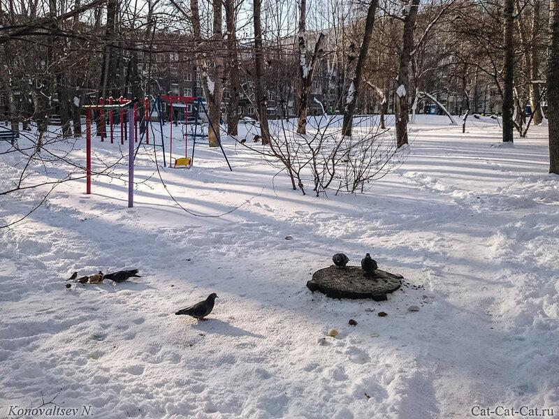 Воробьи и голуби