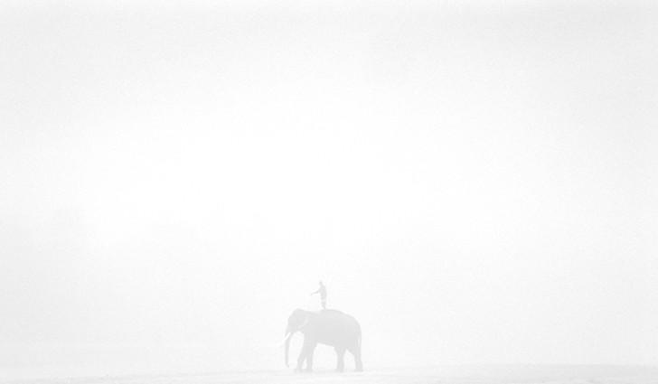 4. Возвращение слона в лагерь в национальном парке «Читван» на Шри-Ланке.