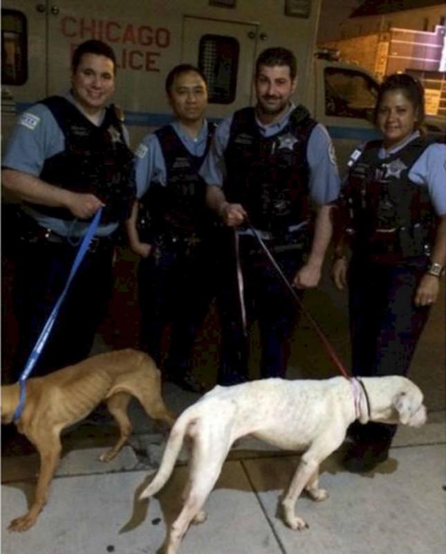 Чикагские полицейские решили проверить здание из-за подозрительных звуков, доносившихся оттуда. Соба