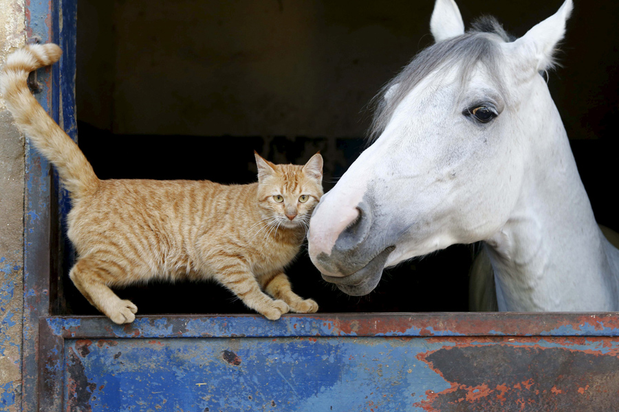 A cat nuzzles a horse in Beirut, Lebanon, on February 16, 2016.