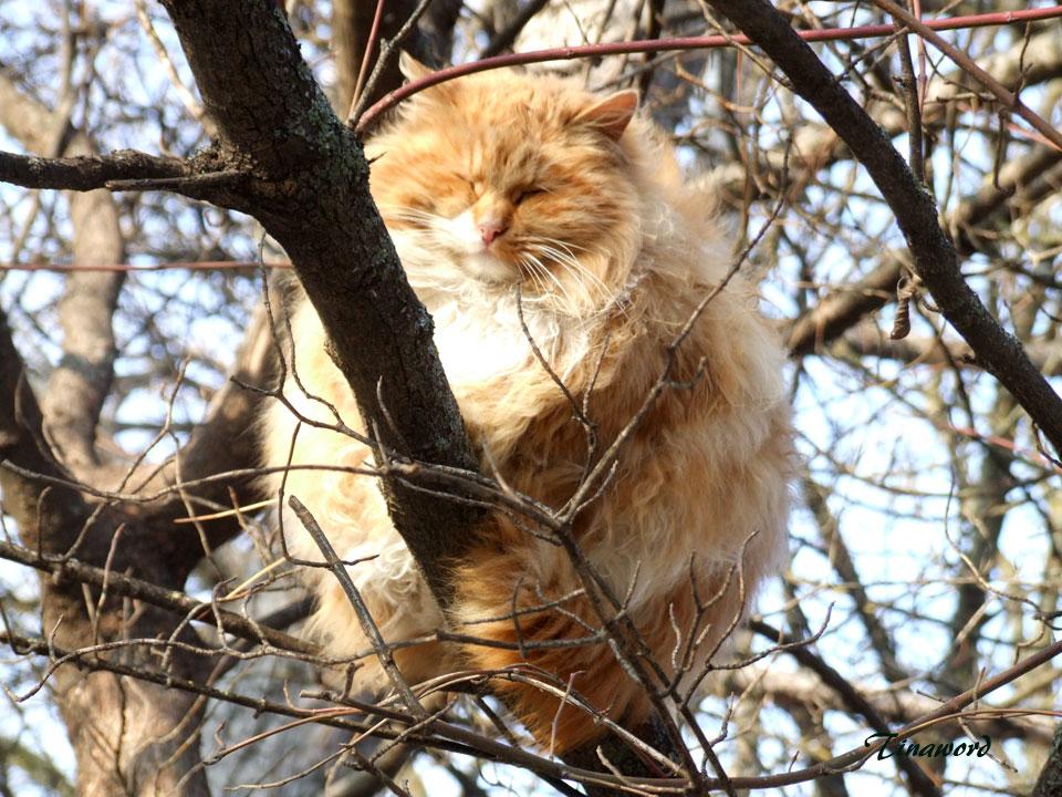 коты-1.jpg