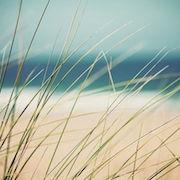 трава и песок