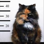 Кот преступник