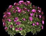 цветы (100).png