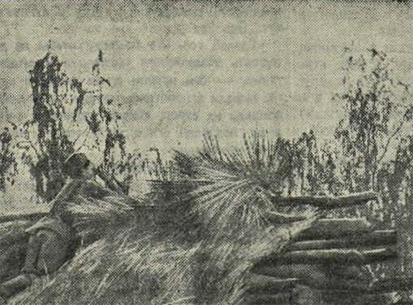 «Красная звезда», 20 августа 1941 года, Красная Армия, красноармеец