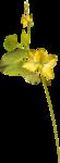 Lemony-freshness_elmt (37).png