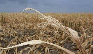 Фермеры требуют ввести в Молдове чрезвычайное положение