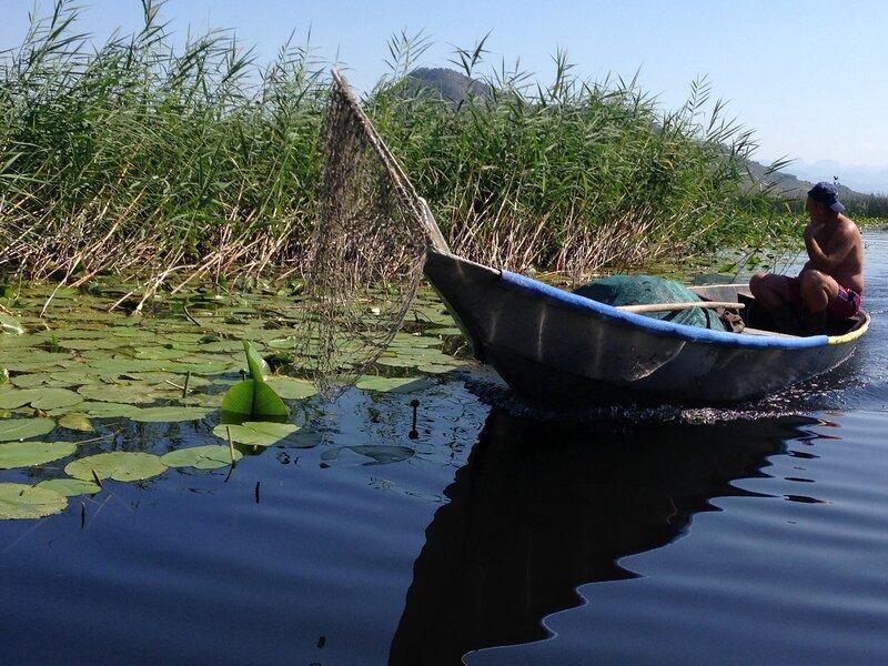 Скадарское озеро с лилиями и бакланами