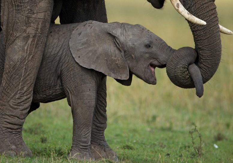 маленький слоненок