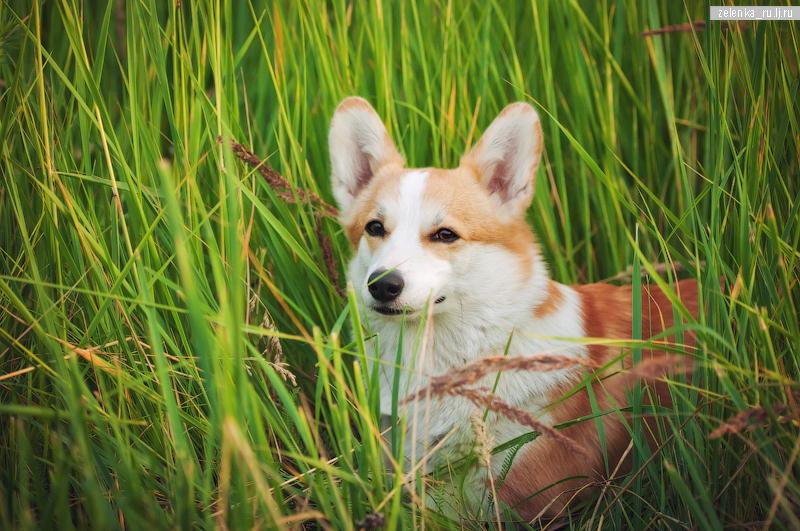 пофотографирую Ваших собак! 0_161288_85810c9c_orig