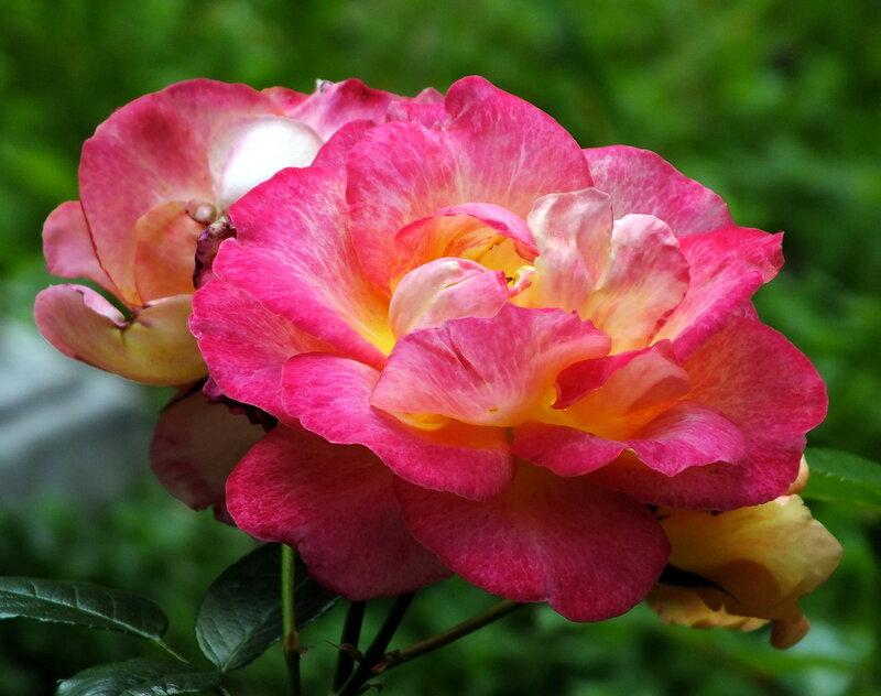 Лето в РОЗОВОМ цвете