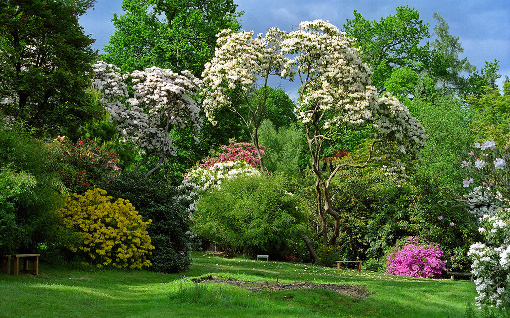 <b>Leonardslee Gardens: Landscape Garden and lake views</b>