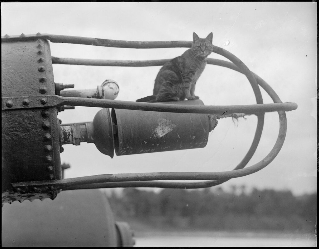 Cat on contraption, 1930