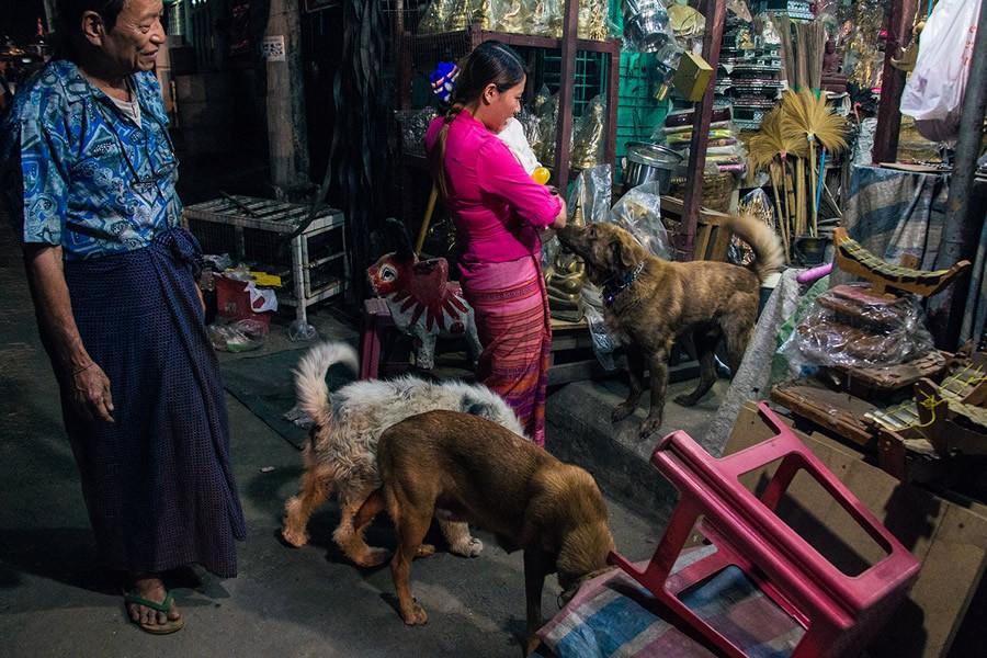 15. «Дела в магазине моих родителей идут плохо, потому что там всегда полно собак. Но родители все р
