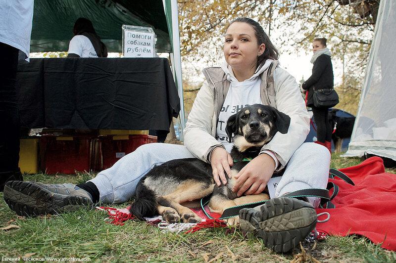 Осень. Фестивальный парк. Собаки. 04.10.14.22..jpg