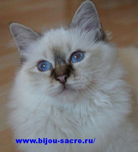 http://bijou-sacre.ru/