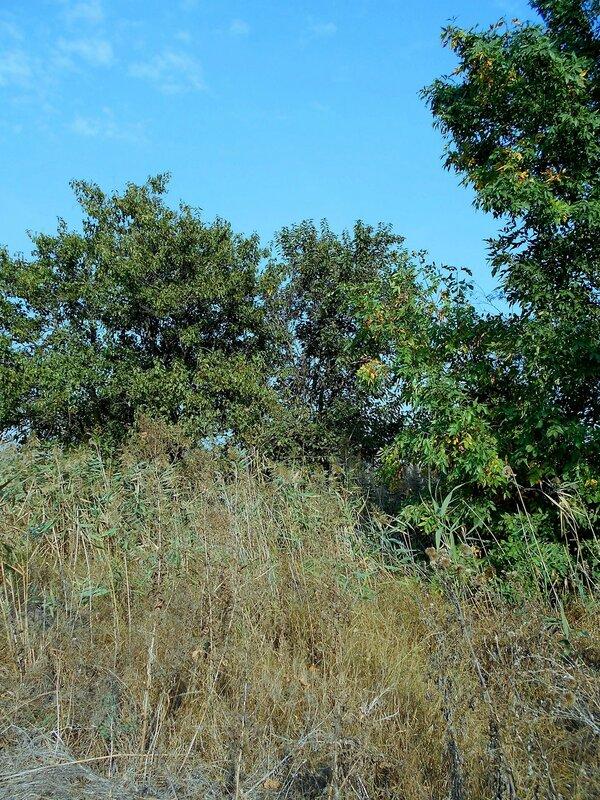 У леса, в травах ... DSCN1432.JPG