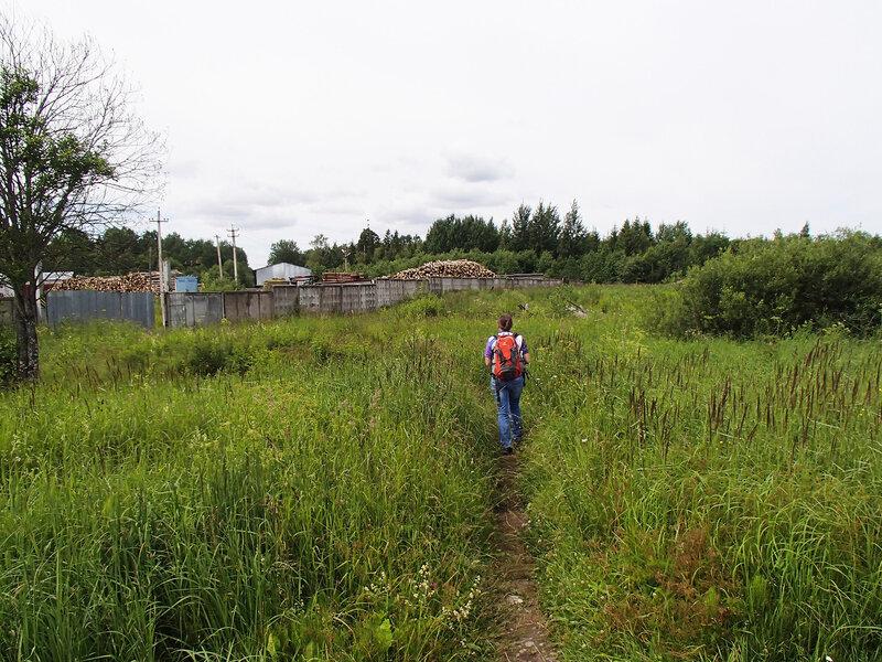 начало дороги от станции Чаща на озеро Вялье через лесопункт