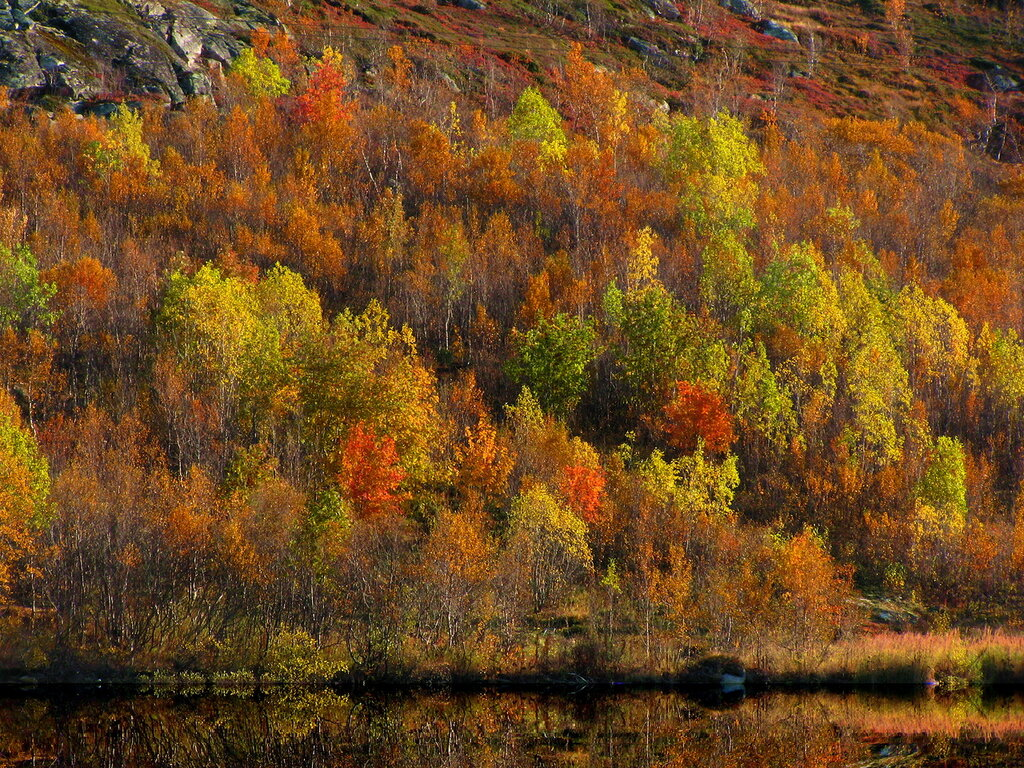 Золотая осень..jpg