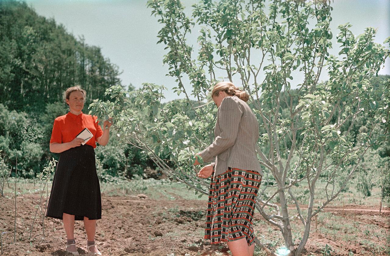 Знатный садовод Ворошева в саду опытной сельхозстанции