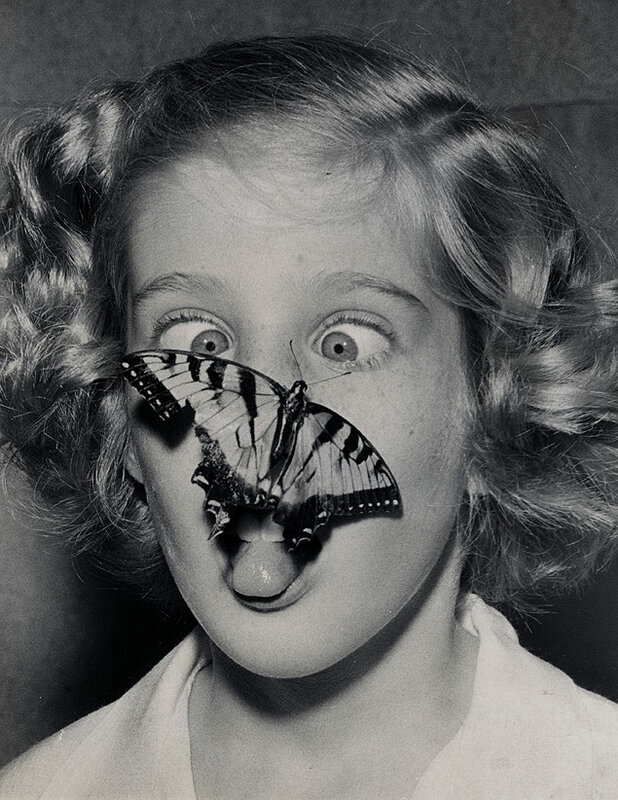 A butterfly captured by Susan Bermann, flutters out of its jar and lands on her nose