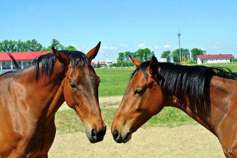 Всадниками чему снятся кони к с