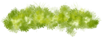 Bush and Grass  (109).png