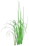 Bush and Grass  (131).png