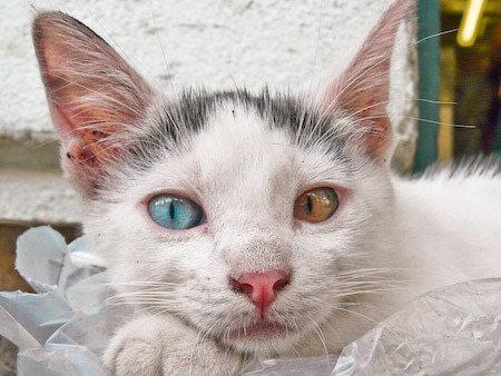 У тебя восхитительные глаза разного цвета!