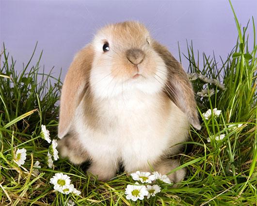 Морковка для Билли. Сказка на ночь. Кролик