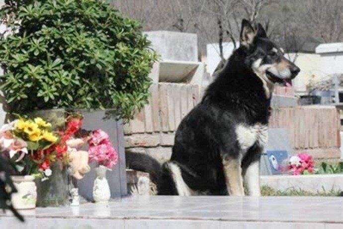 Самые преданные собаки