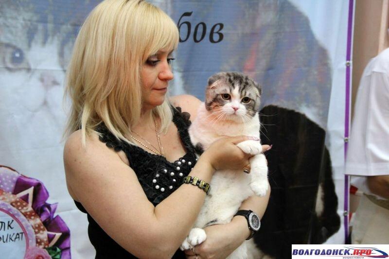 выставка кошек В Волгодонске