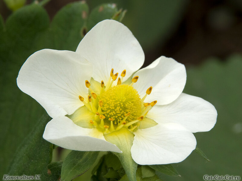 Макросъемка - насекомые на цветах