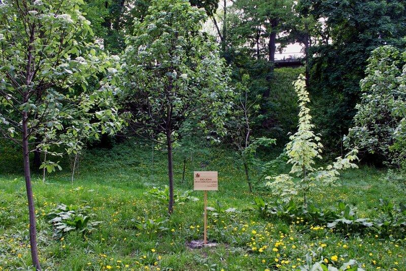 Растительность эко-зоны