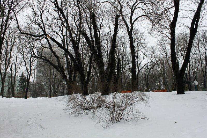 Поздняя весна в Киеве