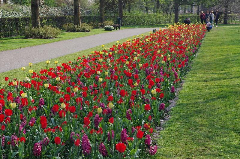 Кёкенхоф - парк тюльпанов в Голландии