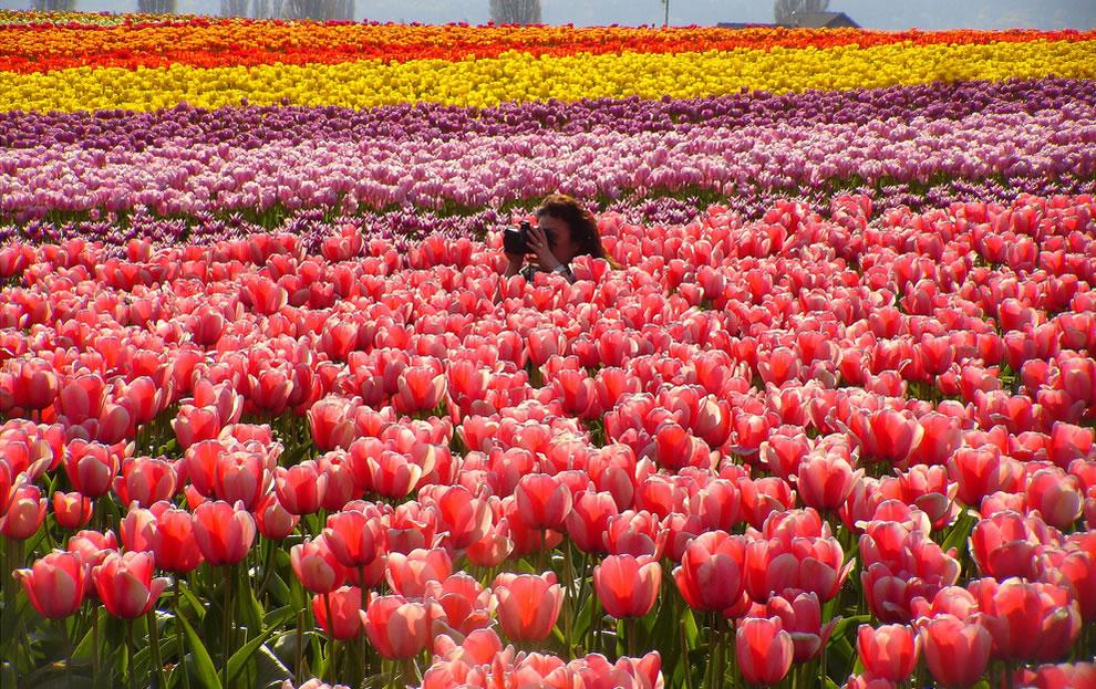 кучу вариантов, смотрите картинки по запросу цветы мира фотографии плохо