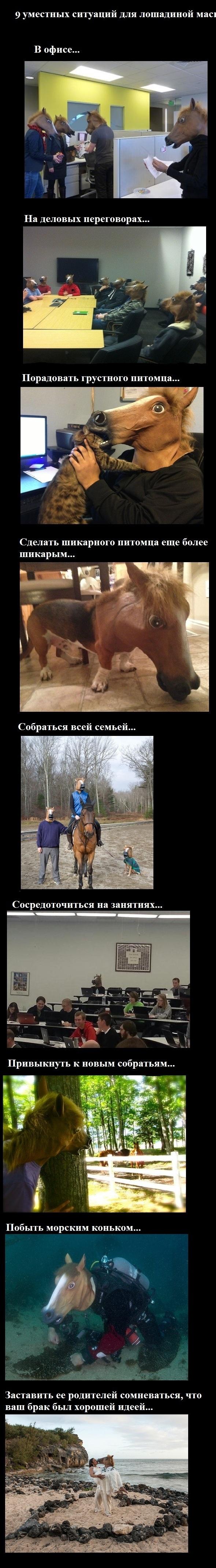 9 уместных ситуаций для лошадиной маски
