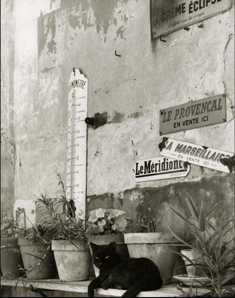 1955. Провансальском кошка