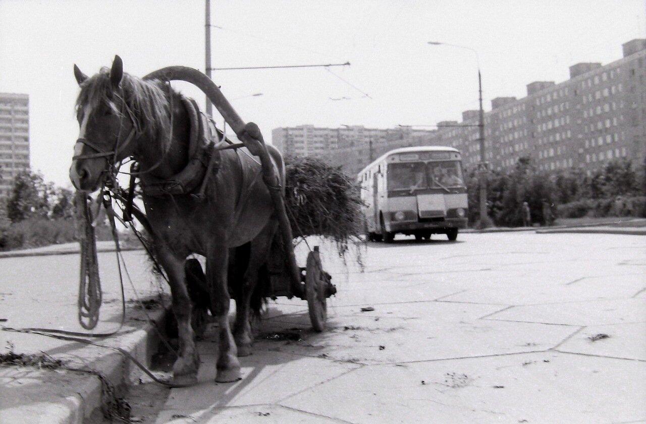 1979 год. Москва, Юго-запад