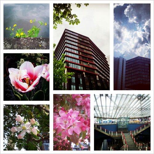 Spring in Rotterdam