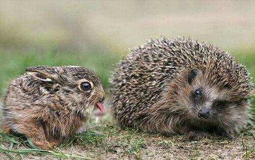 Фотоприколы с животными