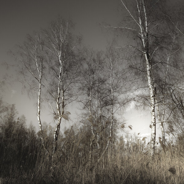 Фотографии болота Jürgen Heckel