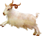 TurningLeafApothecary_LorieD_c_Sir_Gilbert_Goat1b.png
