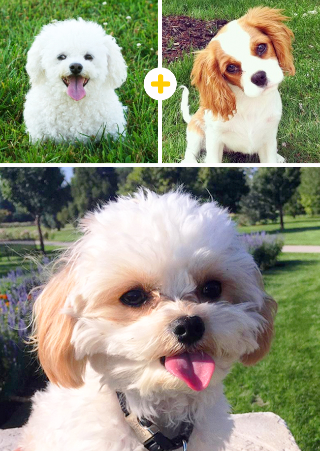 15очаровательных собак, которые получились врезультате неожиданных сочетаний