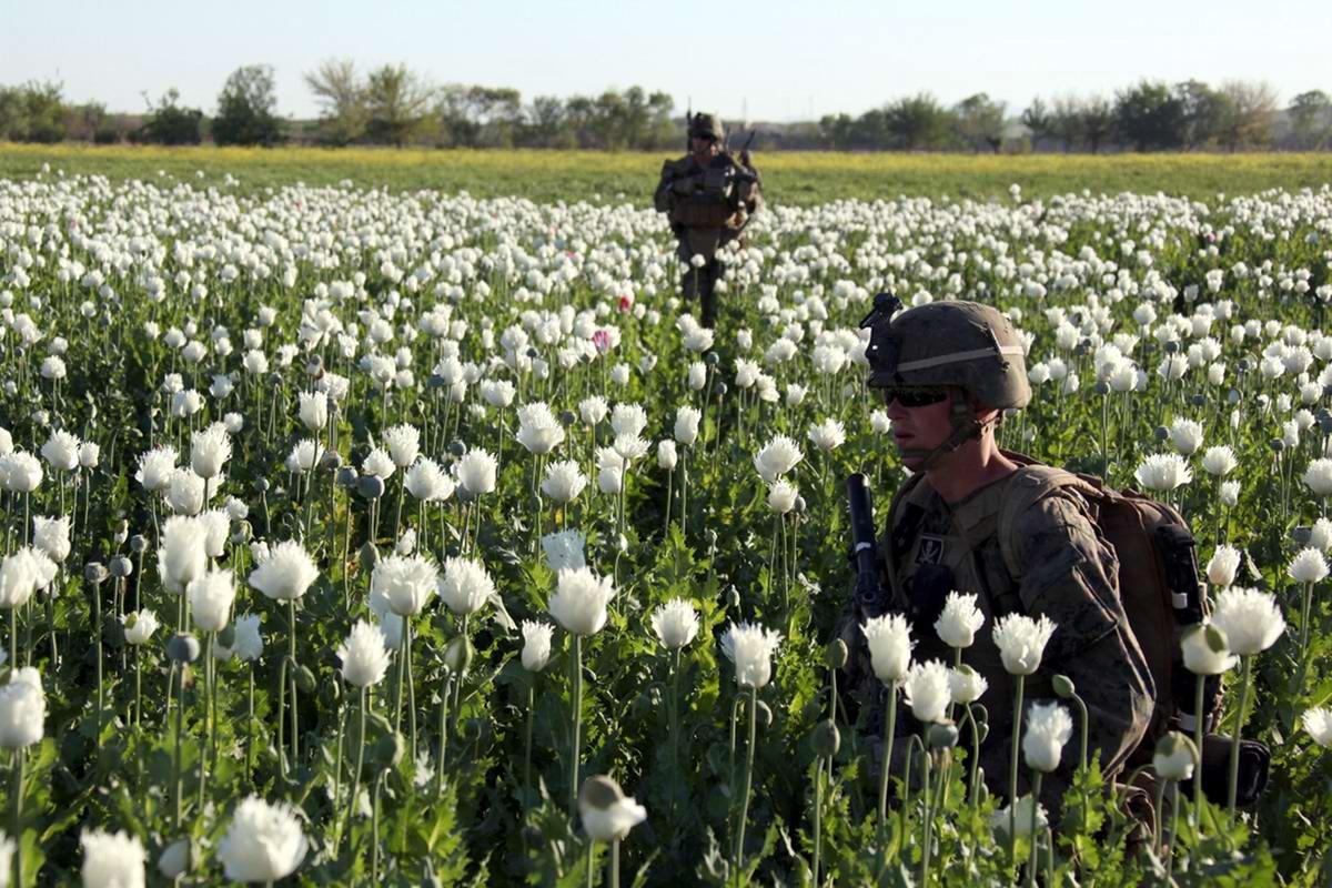 Посреди маковых полей Афганистана - фотографии военнослужащих корпуса морской пехоты США (16)