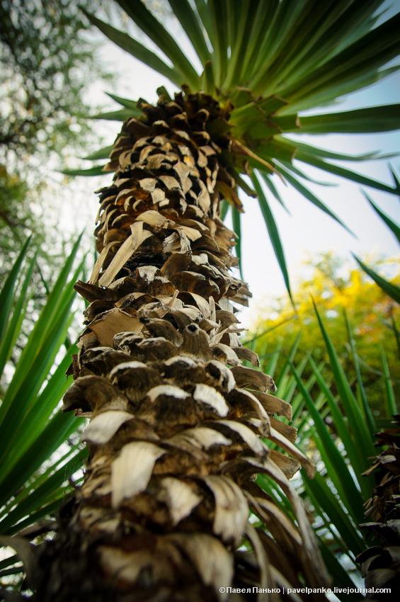 пальма дерево pavelpanko