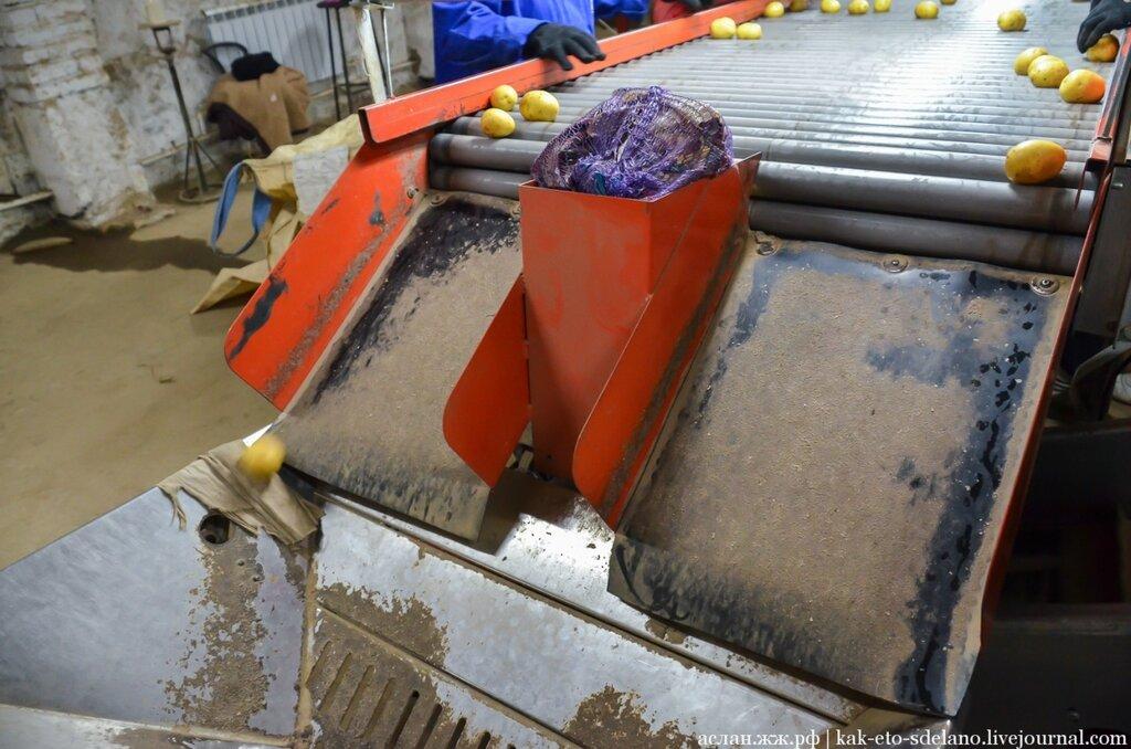 Как выращивают, собирают и обрабатывают картошку