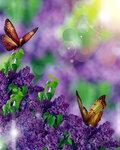 Lilac (5).jpg